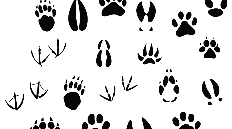 Big set of animal footprints include mammals and birds