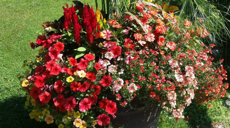 big flower pot with plants