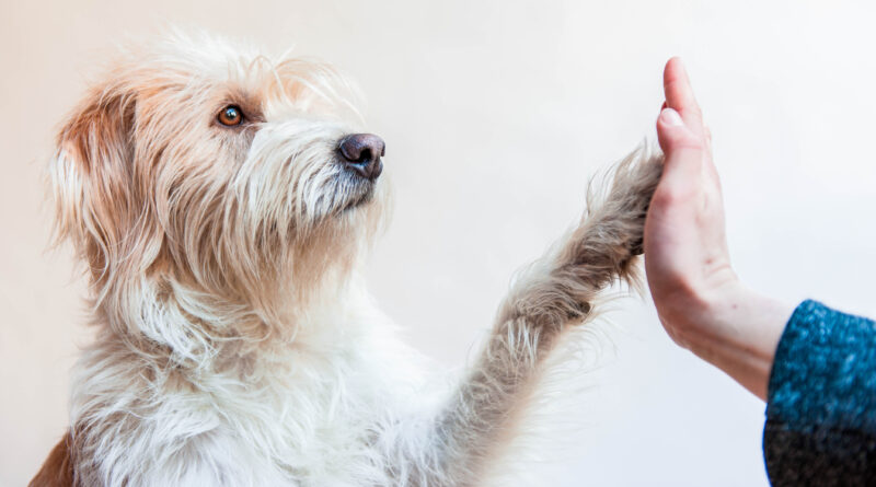 old dog high five