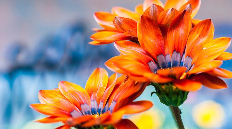 close up of orange flowers