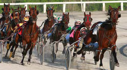 Kawartha Downs Horse Racing