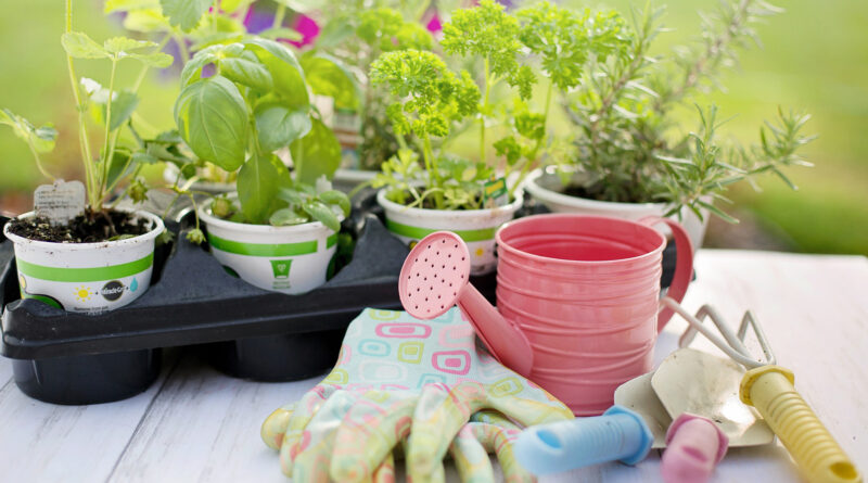 plants with gloves and watering can