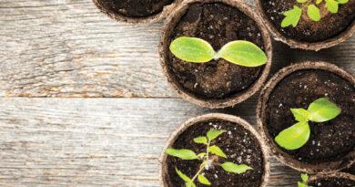 Bringing Your Garden Indoors